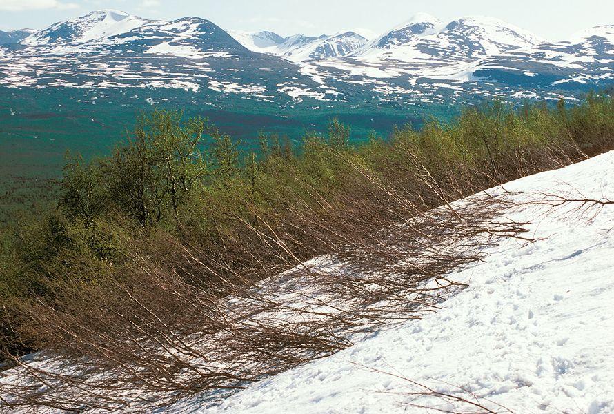 Alpandino :: Why treelines? :: Abisko (N-Sweden)