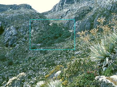 Alpandino :: Why treelines? :: High altitude forest ...