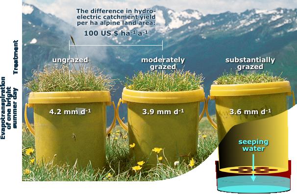 Alpandino Alpine Plants And Water Using Lysimeters