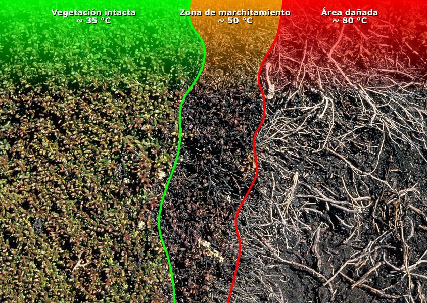 Alpandino plantas y estr s clim tico estr s por - Plantas que aguantan temperaturas extremas ...