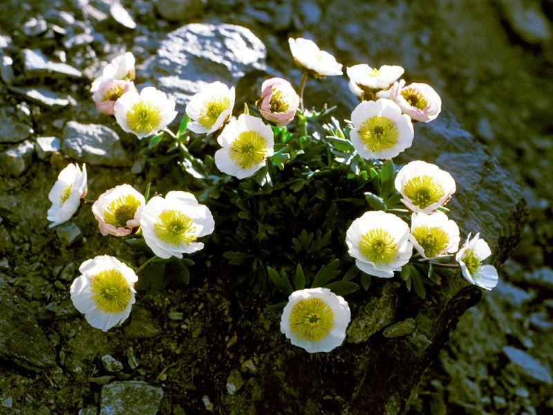 Pin Plantas No Vasculares O Briofitas Tipos De Hawaii on Pinterest